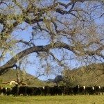 Santa Ynez California. Photo credit Nancy Chuda for LuxEcoLiving.