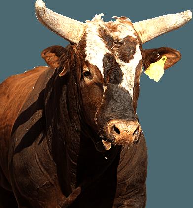 2014 Pbr Bull Riding Champion