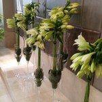 Lillies Quin