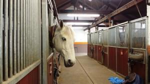 coworth horse